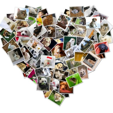 Heart Shaped Photo Canvas Collage | Heart shaped