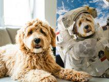 Buy a Custom Astronaut Pet Portrait