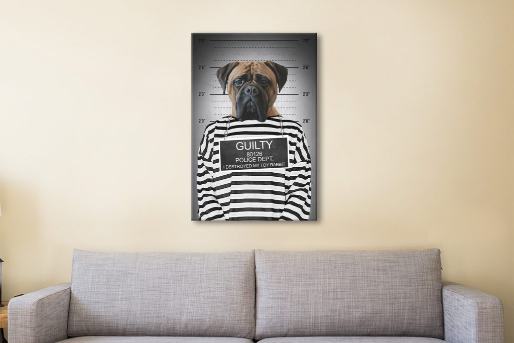 Convicted Pet Portrait Canvas Print Australia