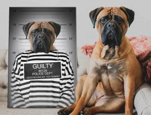 Personalised Convict Dog Portrait Canvas Art