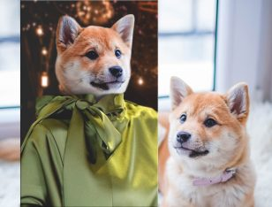 Buy a Custom Fashionista Canvas Pet Portrait