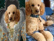 Queen Elizabeth Custom Pet Portrait