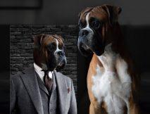Personalised Suited Pet Portrait Canvas Art
