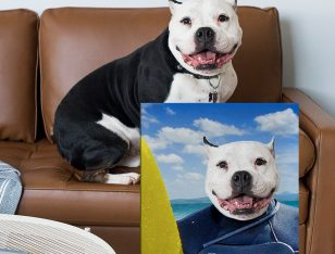 Buy The Surfer a Custom Pet Portrait Print on Canvas