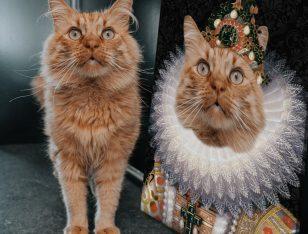 The Monarch Pet Portrait Art